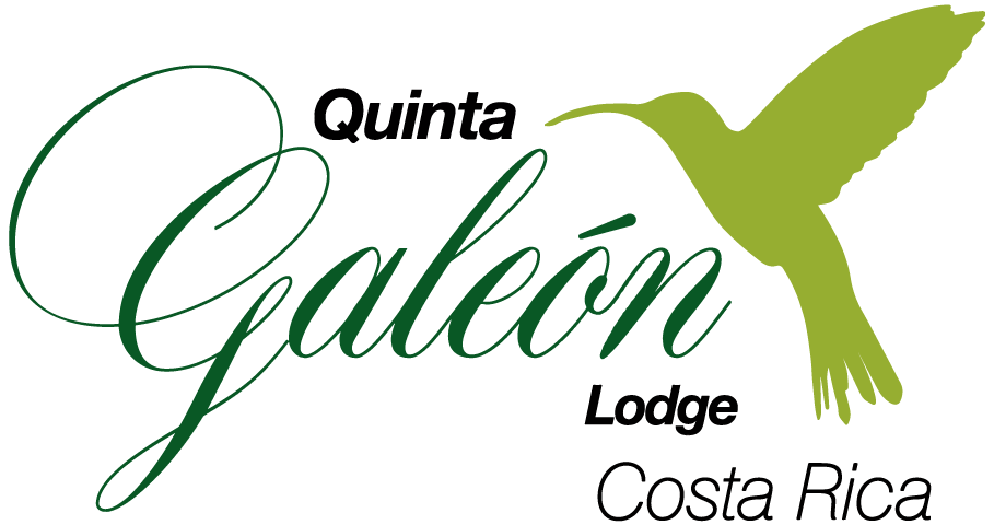 Quinta GALEON Lodge | Hummingbird and Birding Photography Paradise Hotel
